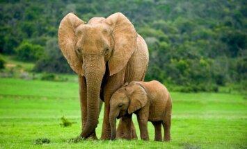 ВИДЕО: Умные слоны спасли упавшего в бассейн малыша