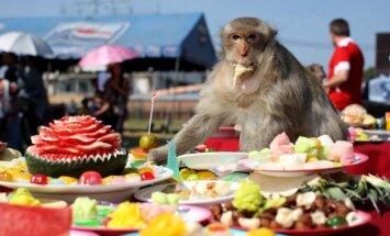 Ceļot ar garšu! Pieci kulinārie festivāli, kurus šogad vēl var apmeklēt
