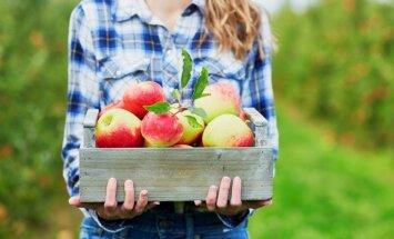 No zemeņu stādīšanas līdz ābolu vākšanai – dārza darbi rudens gaidās