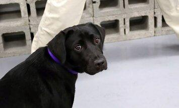 Par pienākumu nepildīšanu CIP atlaiž slinku dienesta suni Lulu