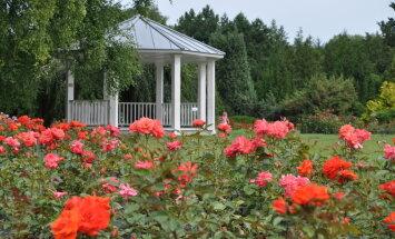 Fotopastaiga pa ziedošo Salaspils botānisko dārzu