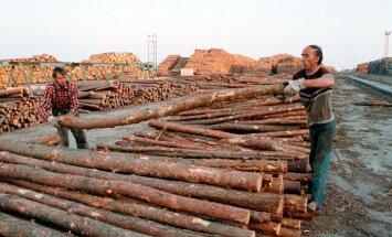 'Rīgas meži' būvēs 3 miljonus latu vērtu kokapstrādes ražotni