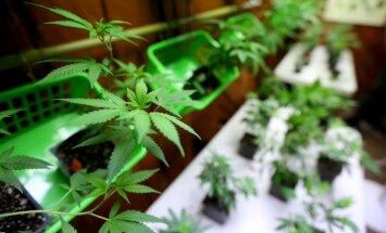 Kanāda nākamgad legalizēs marihuānu, sola ministre