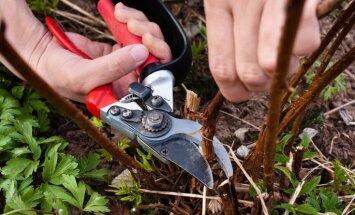 Dārzkopības ABC: dārza instrumentu pareiza kopšana un uzglabāšana