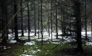 Glābēji naktī Raiskuma pagastā atraduši mežā apmaldījušos cilvēku