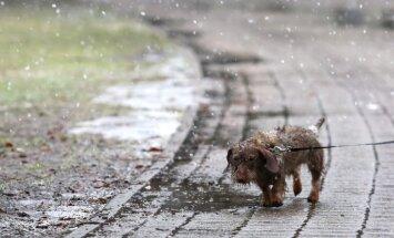 Nedēļas izskaņā nedaudz pastiprināsies vējš un iespējams lietus