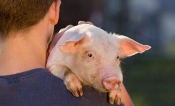 ВТО отклонила апелляцию России по делу о запрете поставок свинины из ЕС