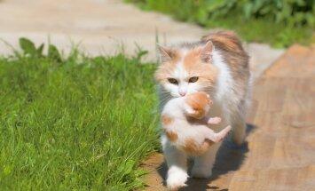 Septiņi murrātāju koloniju kopēji saņems īpašu apbalvojumu 'Kaķu eņģelis 2017'