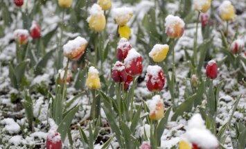 Laika vērotājs prognozē ziemīgu pavasara sākumu; bargā ziema ies secen