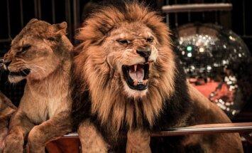 15 июня. Прослушка политиков, отмена роуминга, цирк без зверей, ответы Путина и смерть Баталова