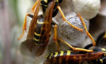 Piecgadīga meitene iekāpj lapseņu pūznī un piedzīvo pamatīgu kukaiņu uzbrukumu