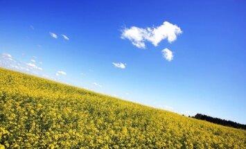 Для покупки сельской земли нужно будет владеть госязыком и жить в Латвии