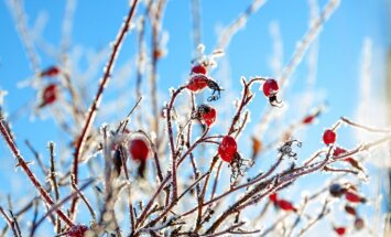 Starp ziemu un pirmajām pavasara vēsmām – dārza darbi februārī