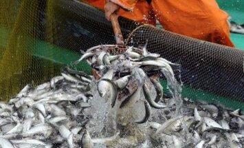 Latvija atbalsta EK rekomendāciju atvērt pievienošanās sarunas ar Serbiju sadaļā par zivsaimniecību