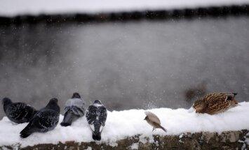 Latvijā atgriezīsies ziema; gaidāms sniegs un kailsals