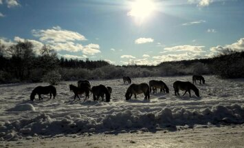 Savvaļa tuvumā: Iemūžini, kā dzīvnieki pārlaiž ziemu!