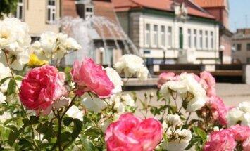 Rožu svētki Tukumā – 'Sapnis par rozi'