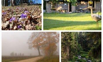 Tests: Viensēta, līkums vai koks – kurš Latvijas ainavas elements esi?