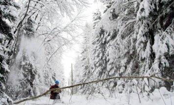 VDI sāk pārbaudes kokapstrādes un mežizstrādes uzņēmumos