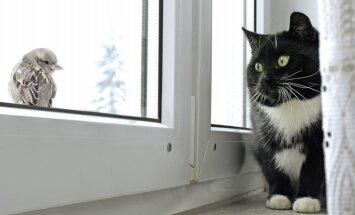 Putnu apskādētie logi un palodzes – kā nomazgāt baltos izkārnījumus