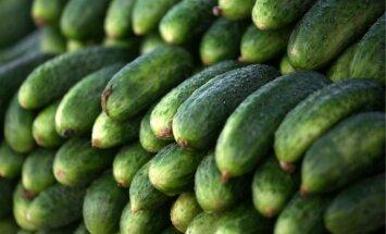 Nav pamata bažīties par Latvijas dārzeņu pieejamību, pauž audzētāji