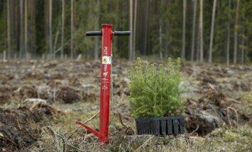 Raidījums: Latvijas mežos investē arī 'IKEA' un 'H&M' akcionārs
