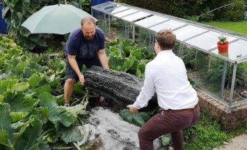 Foto: Lielbritānijā izaudzis 76 kilogramus smags kabacis