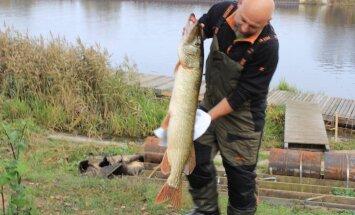 Foto: Makšķernieku sacensībās Jelgavā izvelk 8,2 kilogramus smagu līdaku