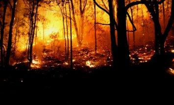Spānijā plosās mežu ugunsgrēki