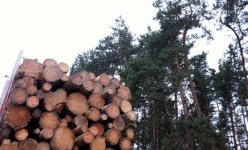 Импорт продукции латвийской лесной отрасли за год вырос на 10%