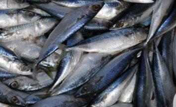 Latvijas zivju eksportu uz Krieviju varētu atjaunot tikai pēc atkārtotām pārbaudēm