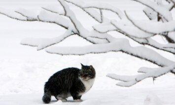Svētdienas rītā Staļģenē sasniegts šīs ziemas aukstuma rekords