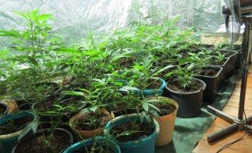 Saistībā ar sižetu par marihuānas audzēšanu soda LTV