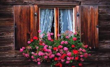 Топ-9 неприхотливых комнатных цветов, цветущих круглый год