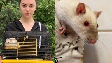 Рига: крыса Света из полицейской хроники обрела новый дом