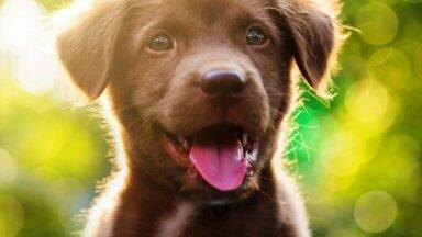 Четыре способа, которыми собаки проявляют свою привязанность к хозяину