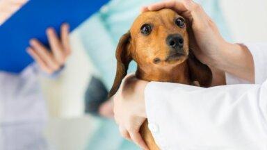 В Латвии зафиксирован первый случай Covid-19 у собаки