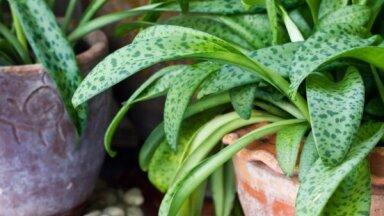 Топ-9 старомодных растений, которые когда-то жили в каждом доме