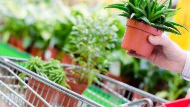 Зеленый гороскоп. Какие комнатные растения подходят каждому знаку зодиака