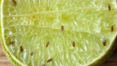 No cepeškrāsns tīrīšanas līdz mušiņu iznīdēšanai: virtuvē noderīgi tautas padomi