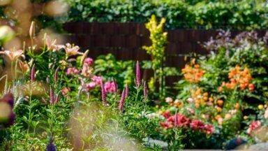 Gribējām dārzu ar taureņiem, kurā viss krīt virsū un nekas nav jādara