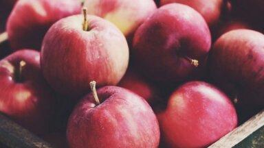 No āboliem līdz rozēm: kas jādara dārzā vēlā rudenī
