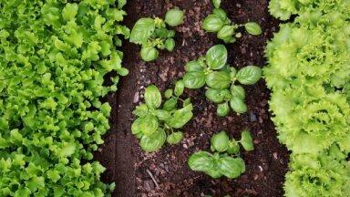 VAAD призывает не покупать незарегистрированные в Латвии средства защиты растений