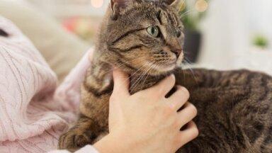 10 признаков того, что вы хороший хозяин для вашей кошки