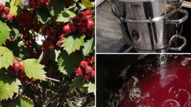 Sezonas produkts: vilkābeļu augļu sīrups ziemai