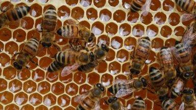 Nosaka atbalsta pasākumus biškopjiem