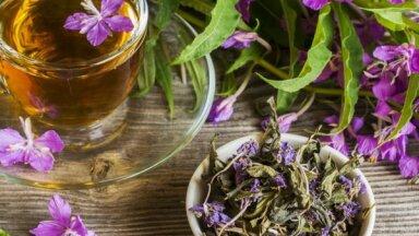 Teiksmainā ugunspuķe: kā pareizi fermentēt auga lapas tējai un kā to izmantot