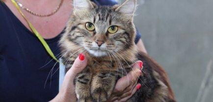 ФОТО: в Риге проходит Международная выставка собак и кошек