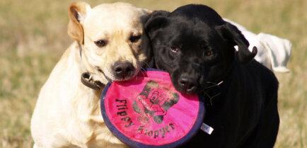 5 команд, которые должна знать каждая собака