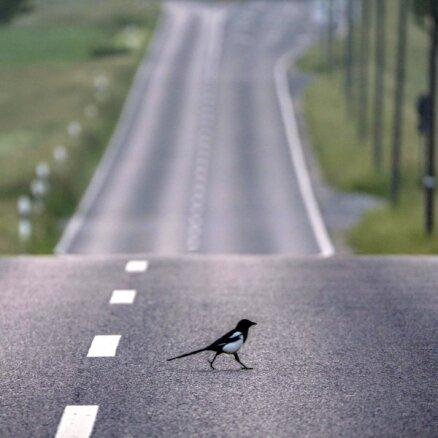 Konkurences padomes izpēte ceļu būves jomā varētu ilgt līdz diviem gadiem